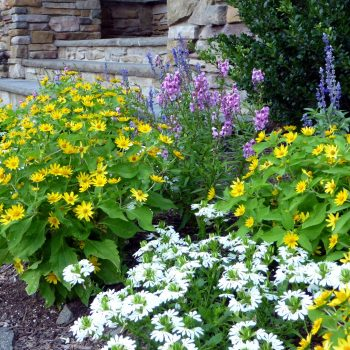 Bright Annuals by Front Entry
