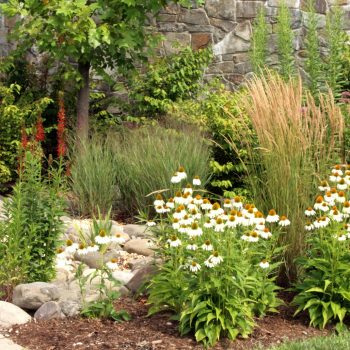 Naturalistic Planting of Echinacea and Perennial Grasses
